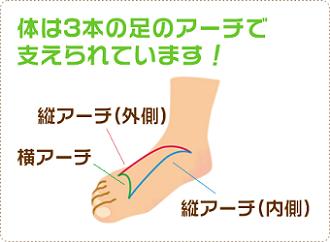 図:体は3本の足のアーチで支えられています!