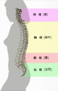 腰椎 アーチ